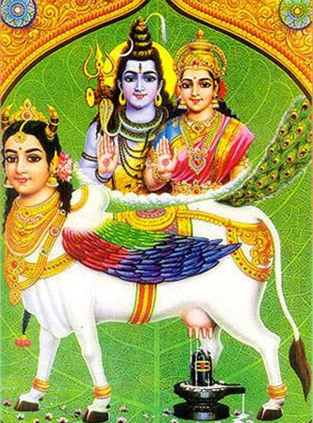 Gau Gayatri Japa Vidhan