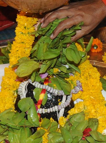 Lord Shiva Abhishek With Bel Patra Puja